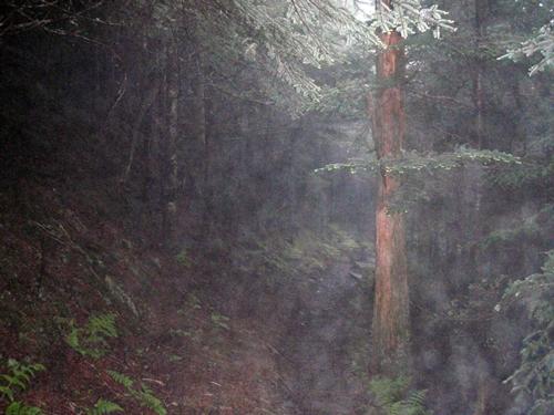 Dense vegetation along Appalachian Trail, Great Smoky Mountains National Park
