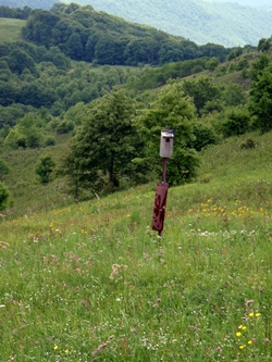 Bluebird perched on birdhouse in field near Max Patch, Appalachian Trail.