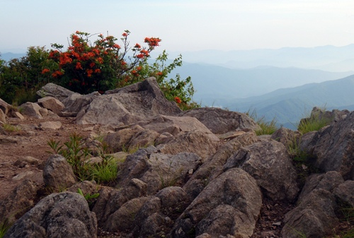The intersection of heaven and earth at Thunderhead Mountain and Rocky Top, Appalachian Trail, Great Smoky Mountains. Rhododendron and flame azaleas bloomed brightly against the sky.