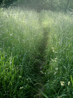 Appalachian Trail through field after Mountaineer Shelter