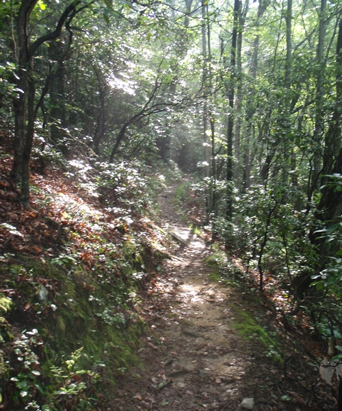The Appalachian Trail leveled and descended the last three miles to Cable Gap Shelter, passing through rhododendron, mountain laurel, and flame azalea.