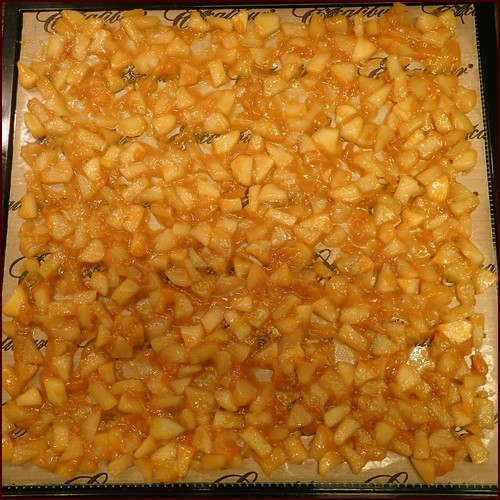 Dehydrating apples and apricots previously cooked on the stovetop.