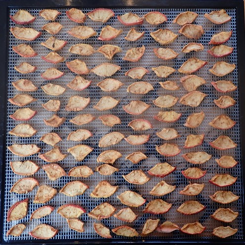 Dried apples on Excalibur dehydrator tray.