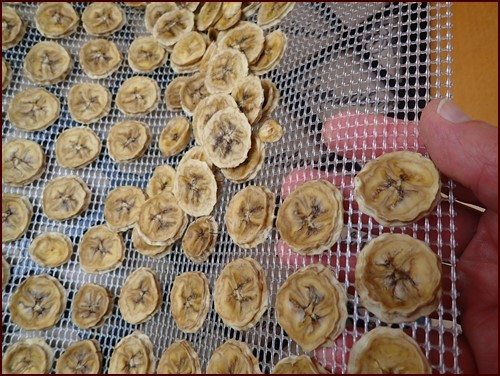 Removing slightly sticky bananas from an Excalibur dehydrator tray. Flexible mesh sheets make it easy.