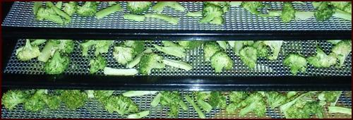 Dehydrating Broccoli and Cauliflower