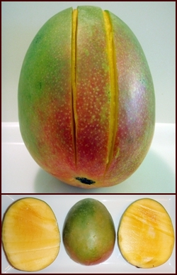 How to Cut a Mango for Dehydrating