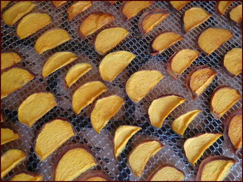 Sliced peaches after dehydrating.
