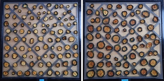 Dehydrated zucchini chips. Raw on left, steamed on right.