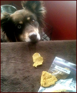 Homemade Dog Treats: Chicken Chips