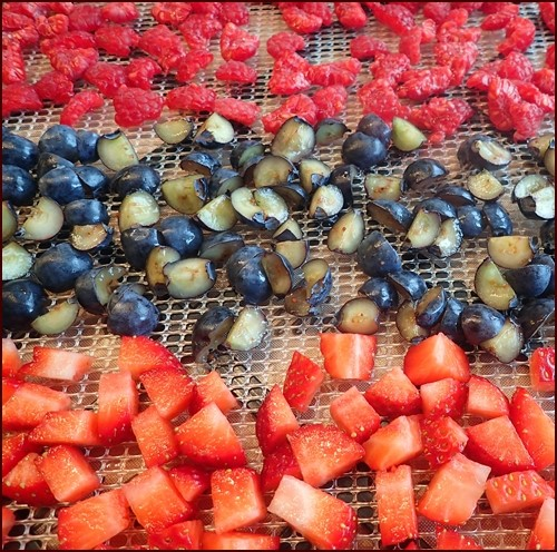 Top to bottom: Dehydrating raspberries, blueberries, strawberries. Note that the raspberries and blueberries were cut into smaller pieces for faster drying.