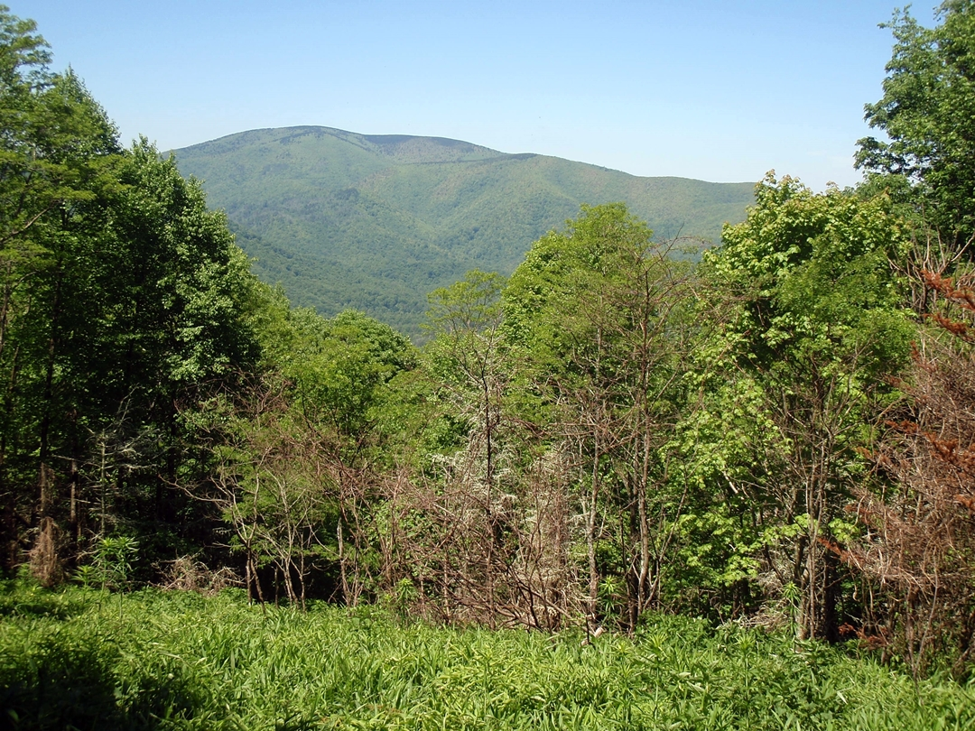 View of Unaka Mountain from the Appalachian Trail