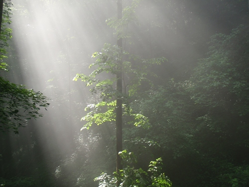 Light Streaming into cove on the Appalachian Trail near No Business Knob Shelter
