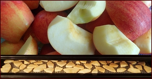 Dehydrating Fruit: Quarter and slice apples thinly. Dry @ 135 F for 8 - 12 hours.