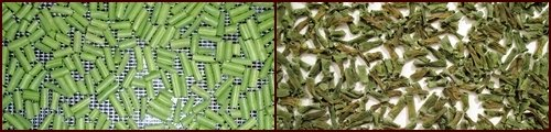 Dehydrating Green Beans