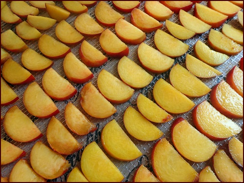 Sliced peaches on Excalibur dehydrator tray before dehydrating.