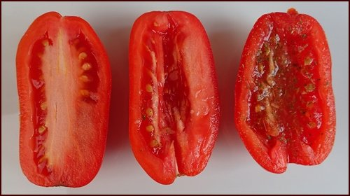 Tomatoes cut in half and seasoned before drying.