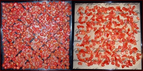 Dehydrating tomatoes: Sliced cherry tomatoes on left, diced tomatoes on right.