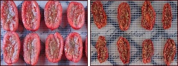 Dehydrating San Marzano Tomatoes