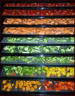 Cut Vegetables on Excalibur Dehydrator Trays.