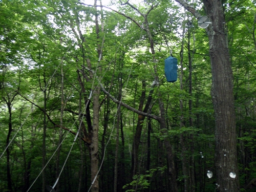 Bear Cables at Walnut Mountain Shelter, Appalachian Trail